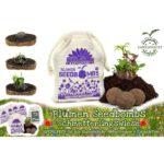 Guerilla Gardening Schmetterlingswiese